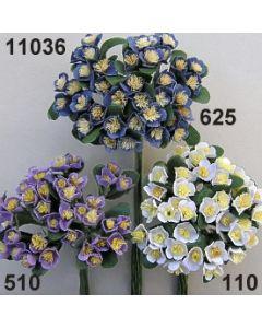 Thymus Blüte / 11036