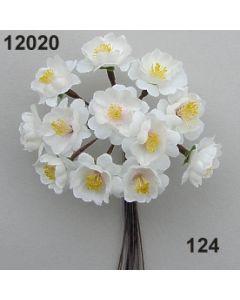 Apfelblüte / champagne / 12020.124