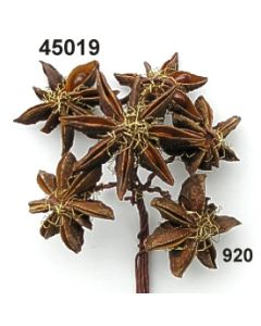 Bouillon-Sternanis / gold / 45019.920