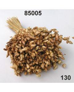 Brizza maxima /natur / 85005.130