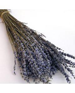 Lavendel preserved / lila / 85015.500