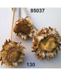 Artischocke groß / natur / 85037.130