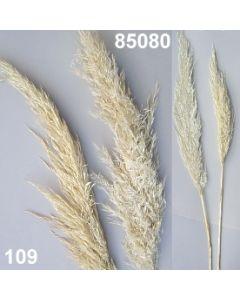 Eryanthus / gebleicht / 85080.109