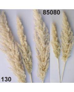 Eryanthus / natur / 85080.130