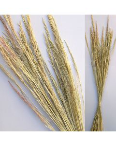 Eulalia Gras natur / natur / 85082.130
