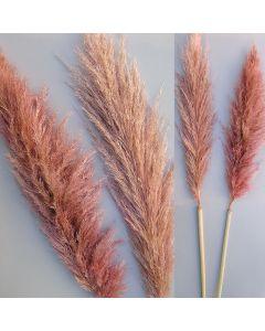 Pampas extra farbig / rosa / 85085.400