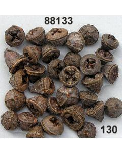 Eukalyptus groß lose / natur / 88133.130